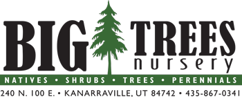 Big Trees Nursery & Gardens Logo
